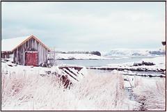 Winter on Vigra_Leica M4 (ksadjina) Tags: 24x36 blimsanden c41 christmas2014 fischerhütten kodakportra400 leicam4 leitzsummicronm50mmf12 nikonsupercoolscan9000ed norway silverfast vigra analog color film mood scan winter