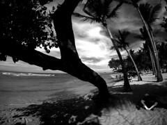 Puerto Plata Beach (MassiveKontent) Tags: beach ocean silhouette dominicanrepublic palmtrees landscapephotography monochrome bw tropics atlantic noir sky clouds shadows contrast noiretblanc blackwhite blancoynegro blackandwhite bwphotography gopro absoluteblackandwhite mono puertoplata dr waves sea