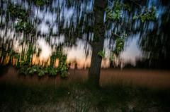 IL VA FAIRE NUIT (zventure,) Tags: zventure nuit couleurs coucherdesoleil flou filé forêt feuilles flore chemin champs