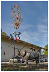 Honneur à notre élue (balese13) Tags: 100nikon 1855mm d5000 gironde graves nikonpassion cheval drapeau mat nikon tricolore illats 2550fav horse balese 500v20f arbre