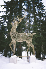 The proud deer (Thisissophia) Tags: deer christmas light nature naturephotography wood tree forest newyearseve mountain snow white cold frozen ice