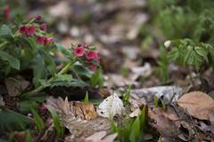 A Dream of Spring (SonjaGreiner) Tags: frühling spring blüte