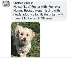 MISSING: DOG in #MARLBOROUGH, small white dog, very skittish DO NOT CHASE. If see contact 587-434-2334. Please share & RT YYC Pet Recovery shared a post. 2019-03-28T14:30:44.000Z by YYC Pet Recovery original fb post-click here http://bit.ly/2FHWbeS page- (yycpetrecovery) Tags: ifttt march 29 2019 0111am