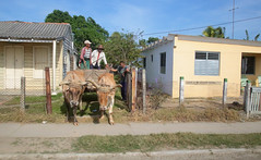 Backyard Oxen (peterkelly) Tags: digital canon 6d northamerica gadventures cuba cubalibre pinardelrio oxen blue sky hat curb sidewalk house home yellow
