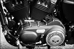 Harley (G. Postlethwaite esq.) Tags: bw derbyshire harleydavidson matlockbath unlimitedphotos vtwin blackandwhite monochrome motorbike motorcycle photoborder