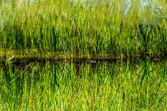 Green Mirror (NathalieSt) Tags: europe france normandie perche bassenormandie campagne countryside jardinfrançois nature nikon nikond750 nikonpassion nikonphotography normandy orne