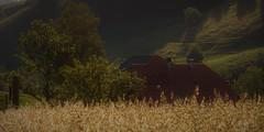 DSC05669 (ursrüegsegger) Tags: linden juli august getreideernte bauernhöfe landschaft regenbogen