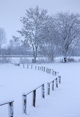 Snowfence (Sarah_Brooks) Tags: landscape somerset fence snow trees winter snowing