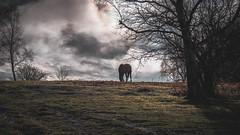 Hi-Yo (robdando) Tags: horse mayhill gloucestershire