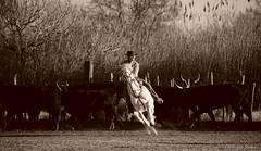 _DSC0671 (chris30300) Tags: camargue cheval