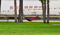 Hammock in The Park (The Vintage Lens) Tags: relax hammock park river tamps floirda tranquill