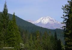 Mount Shasta (Phillip's Lens) Tags: snowcaps northcentralcalifornia picturesquemountainpeak
