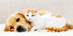 ALLERCURE: ALLERGY CURE FOR YOUR PET (lmscert) Tags: cats dogs allergies treatment animals usa