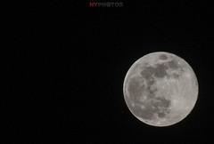 Worm Supermoon (Neil Young Photography (nyphotos.ca)) Tags: wormmoon wormsupermoon superwormmoon moon nikon d700 fotoman calgary alberta canada neilyoung neilyoungphotography nightphotography lunarphotography