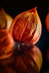 Physalis (Martin Bärtges) Tags: makrofotografie makro macro macrophotography z6 nikon nikonphotography nikonfotografie studiophotography inside studio farbtupfer farbenfroh orange colorful plants pflanzen blumen blüten blossoms flowers natur nature naturephotography naturfotografie