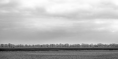 From the train (1 of 3) (+Pattycake+) Tags: cambridge ©patriciawilden2019 uk nature field tree sky clouds landscape bw monochrome blackandwhite evening throughglass fromthetrain journey train farmland