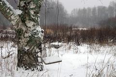 Kask ja kiik (Jaan Keinaste) Tags: pentax k3 pentaxk3 eesti estonia loodus nature lumi snow udu fog talv winter