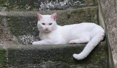 Cats of Porto (XI) (Elisa1880) Tags: cat cats katten kat poes porto portugal animal pet dier huisdier
