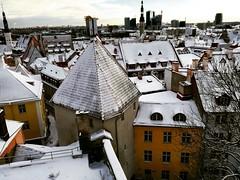 Tallinn (unciclamino) Tags: