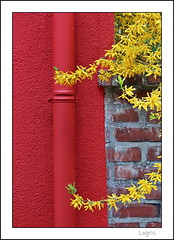 Red against yellow (Logris) Tags: spring springtime red yellow frühling rot gelb natur nature pipe rohr minimal