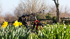 2019 Bike 180, Ride 13, 26th February. (Photopedaler) Tags: 2019bike180 cornishcycling marinpinemountain wildflowers bicycle wintersunshine wintercycling