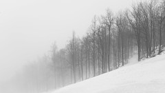 Black & Wihte Forest (BenedekM) Tags: nature hungary hungarian sigma sigma1750f28 nikon nikond3200 d3200 forest woods trees fog foggy mountains hills rockmountains filed panorama winter misty blackandwhite black white
