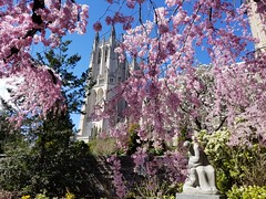 2019-03-31 14.52.59 (littlereview) Tags: dc littlereview 2019 nationalcathedral church flower garden spring blog