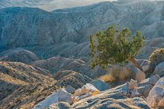 untitled (3 of 28).jpg (xen riggs) Tags: desert california joshuatreenationalpark february2018