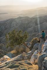 untitled (1 of 28).jpg (xen riggs) Tags: desert california joshuatreenationalpark february2018