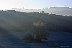 OCÉANO DE SOL (Quico Melero) Tags: albada amanecer arbre arbol tree fred frio cold sol sun larocadelvallès catalunya cataluña catalonia gebrada helada frost sunrise
