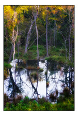 Reflections in a Small Pond (Terry L. Olsen) Tags: arkansas summer landscape intimatelandscape trees reflections sebastiancounty