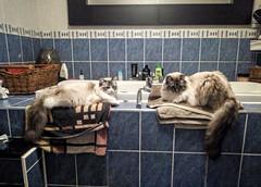Photo of Cat nap in bathroom.