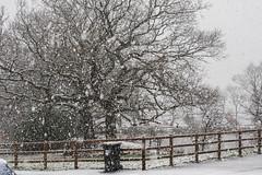 Today's weather forecast... (Maria-H) Tags: snow glossop derbyshire highpeak uk olympus omdem1markii panasonic 1235