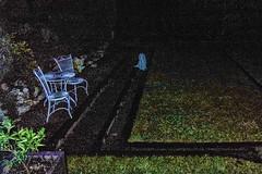 midnight ghost in the garden (glasnevinz) Tags: newzealand wairarapa martinborough vinyard aylstone
