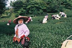 CNV000017 (雅布 重) Tags: nikon f100 nikkor 50mm f14d film taiwan 2018 street fujifilmc200 taipei fujifilm c200 風景 山 茶園 南投
