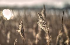 Blo85 (Svendborgphoto) Tags: nikkor nikon nikkorais aisnikkor 85mm14 bokeh blur denmark d800 dof winter water sun nature f14
