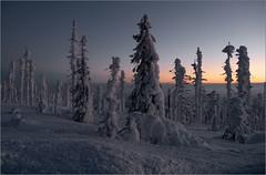 Zwischen Tag und Nacht / Between day and night (ludwigrudolf232) Tags: dämmerung winter schnee abendrot bäume dreisessel