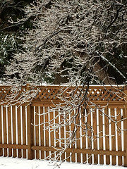 an icy day in Baltimore (karma (Karen)) Tags: baltimore maryland backyard fences trees branches ice texture htt iphone