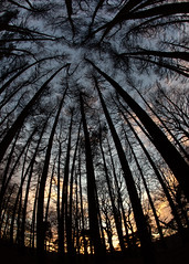 Up, Up & Away (PeskyMesky) Tags: aberdeen scotland lochside woods wood forest sunrise sunset silhouette nature canon canon5d eos