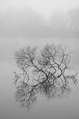 Noyés dans le brouillard ***--+°---° (Titole) Tags: fog branches reflection nicolefaton titole trévoix bassindetrévoix friendlychallenges 15challengeswinner thechallengefactory challengegamewinner storybookttwwinner