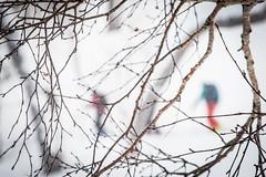 Climbing near Kokusai (Jonathan Teapot) Tags: canon5dmkiii canon70200f4l f4lcanon40mmf28stm hokkaido teine kokusai hirafu annupuri japan splitboard altus gooseberry