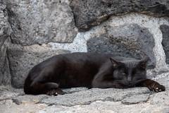 Blacky (jameshjschwarz) Tags: cat gato kanarischeinseln katze lanzarote lumix2835100 lumixgh4 mft spanien es