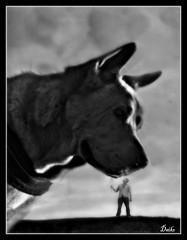 You're Highness (patrick.verstappen) Tags: funny wacky curious amusing enjoyable dog pet texture textured daiko photo picassa pinterest patrick verstappen ipernity ipiccy gingelom google flickr facebook twitter texturé d5100 xxx perro winter trees phototrick photography photographie add belgium color drive maps lovely sweet снег boys dulce hilariious humorous snack cancelled copy akita sharpei ios mobile chuckle dreams follow textura texturado texturizado thanks x snow january trump topmodel boy gmail yahoo imagine yourehighness john barbie softened bw monochroom lol public surrealistic