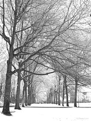 Snow day (CanMan90) Tags: snow trees university victoria britishcolumbia vancouverisland workplace school uvic winter february 2019 sd1200is pointshoot canon