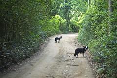 Trilli e Joni (mcvmjr1971) Tags: green nikon d800e vila progresso niterói mmoraes cachorro border collie dog tricolor femea female sigma 85mm art f14