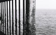 Sea structure (Jim Davies) Tags: olympus om10 slr 50mm ferrania p30 film filmfilmforever analogue photography veebotique 35mm 35mmfilm blackandwhitefilm bw blackandwhite monochrome uk heacham norfolk east england 2018 eastanglia eastofengland may summer coast thewash