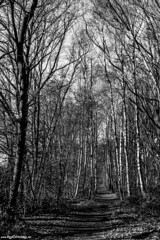 Oude Spoorwegberm hiking trail (GR12 Western route) (Red Cathedral [FB theRealRedCathedral ]) Tags: redcathedral aztektv sony alpha slt mkii sonyalpha dslr translucentmirrortechnology wanderlust digitalnomad contemporaryart urbex hiking protest activism alittlebitofcommonsenseisagoodthing travellingphotographer travel redcathedralart blackandwhite zwartwit noiretblanc nature tree treehugger mechelen kontich 2800love rumst duffel waarloos gr12 a6000 sonyilcea6000 mirrorless ilce6000 alpha6000 apsc abstract