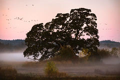Misty Mornings (kephart_kyle) Tags: clouds fall fog inversion layer oak oregon sunrise tree tualatin