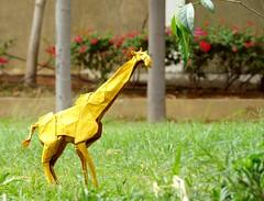 Giraffe (Rohit KO) Tags: origami papercraft paper fold giraffe yellow lokta shuki kato rohit kottamasu nature wildlife animal art