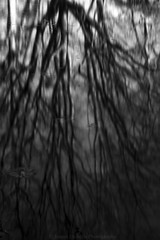 Roots (James Etchells) Tags: barrington court national trust somerset monochrome black white portrait landscape reflection symmetry landscapes abstract close up nikon lee filters south west england uk britain outdoor outdoors photography water tree nature natural world